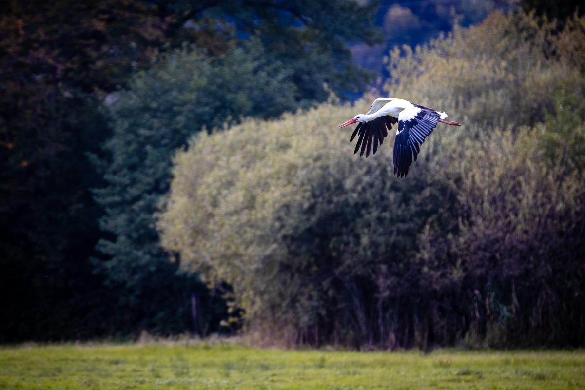 Naturschutzgebiet Kaltbrunner Riet (SG)